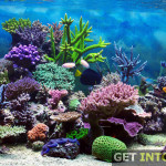 Aquarium 3D Screensaver Free Download