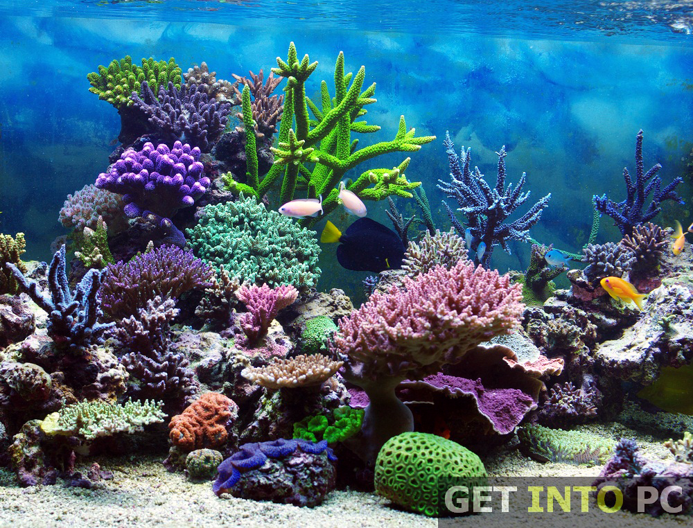 Aquarium 3D Screensaver Free