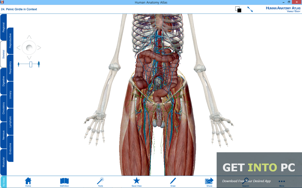 Visible Body Human Anatomy Atlas Free Download