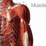 Visible Body Muscle Premium Free Download