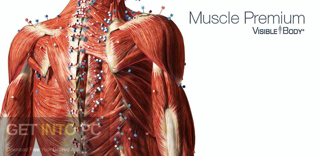Visible Body Muscle Premium Free Download-GetintoPC.com