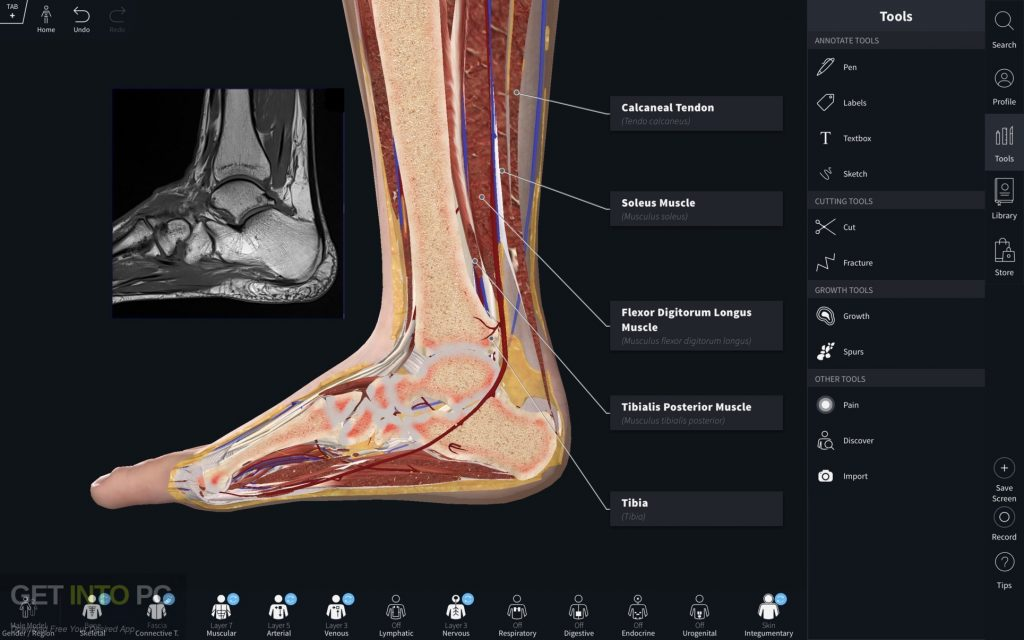 Complete Anatomy 2019 for Mac Latest Version Download-GetintoPC.com