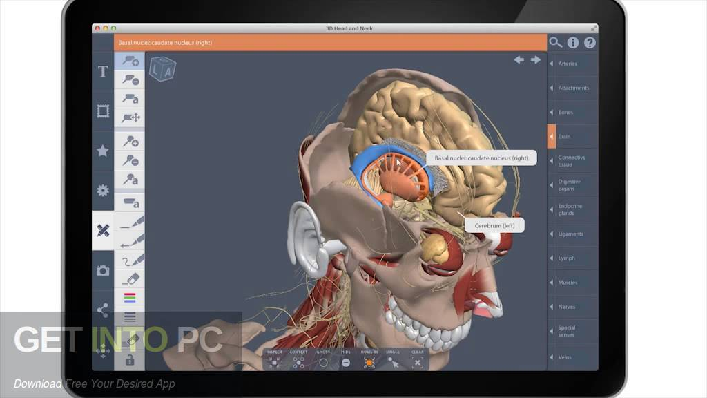 Complete Human Anatomy Primal 3D Interactive Series Latest Version Download-GetintoPC.com
