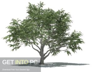 3DQUAKERS Forester v1.1.0 For Cinema 4D R14 R17 Latest Version Download-GetintoPC.com