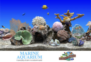 SereneScreen-Marine-Aquarium-Latest-Version-Free-Download