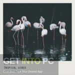 GOGOi – Tropical is Vibes Free Download