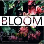 Instruments by Lamprey – Bloom Free Download